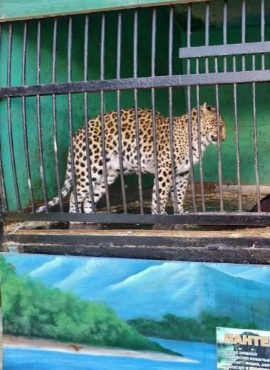 «Ад на колесах» снова в Астрахани: передвижной зоопарк «Сафари» возмутил жителей города