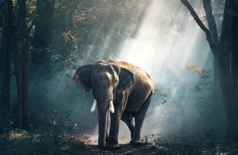 В Китае слоны атакуют жилые поселения. Это серьезная экономическая и экологическая проблема