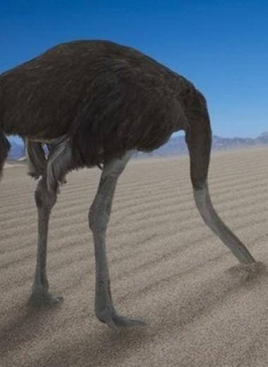 Эффект страуса: почему мы прячемся от проблем