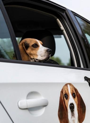 Что нужно знать, если вы едете с собакой за границу на машине?