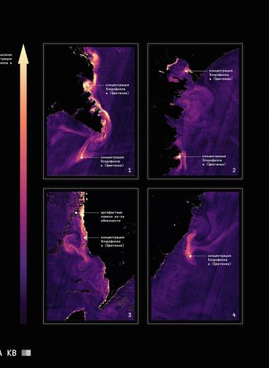 Уникальные снимки красного прилива, который стал причиной катастрофы на Камчатке