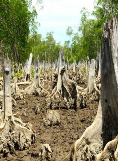 Строительство креветочных ферм высвободило невосполнимые запасы углерода в атмосферу