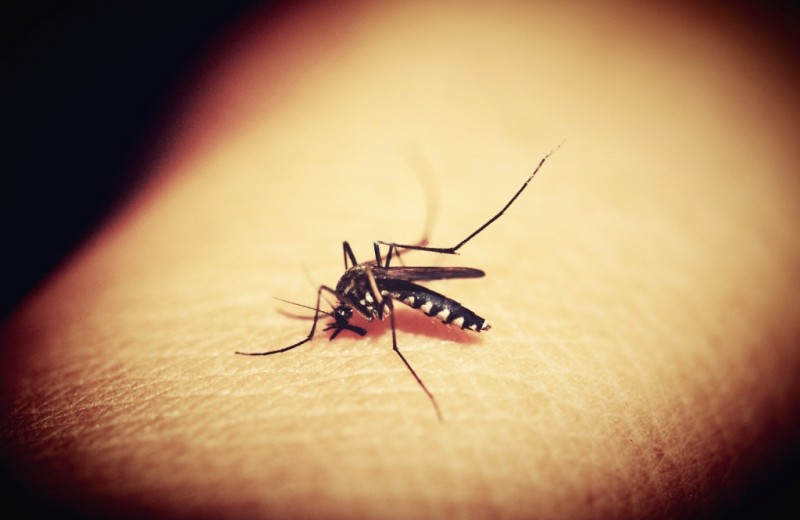 7 фактов о комарах, которые они сами предпочли бы скрыть от людей (но нет)