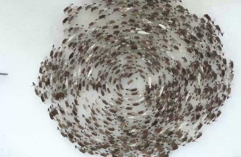 Грандиозный круговорот оленей в Ловозере: видео