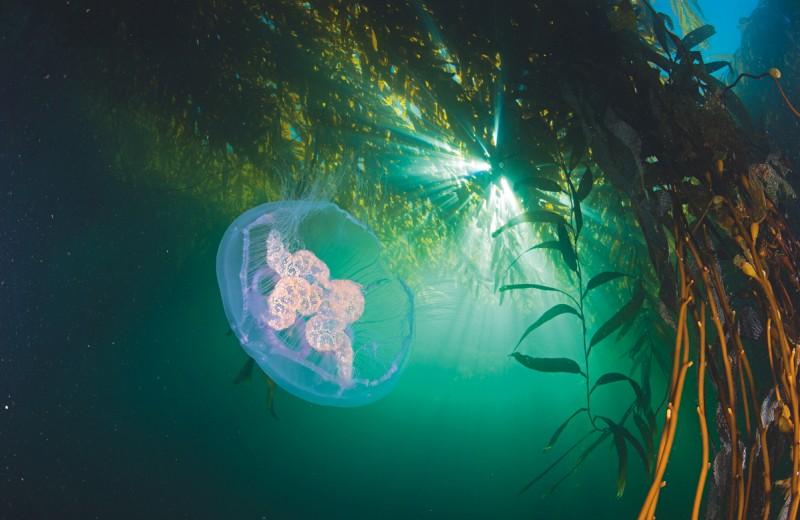 Девственные моря: подводные богатства Чили