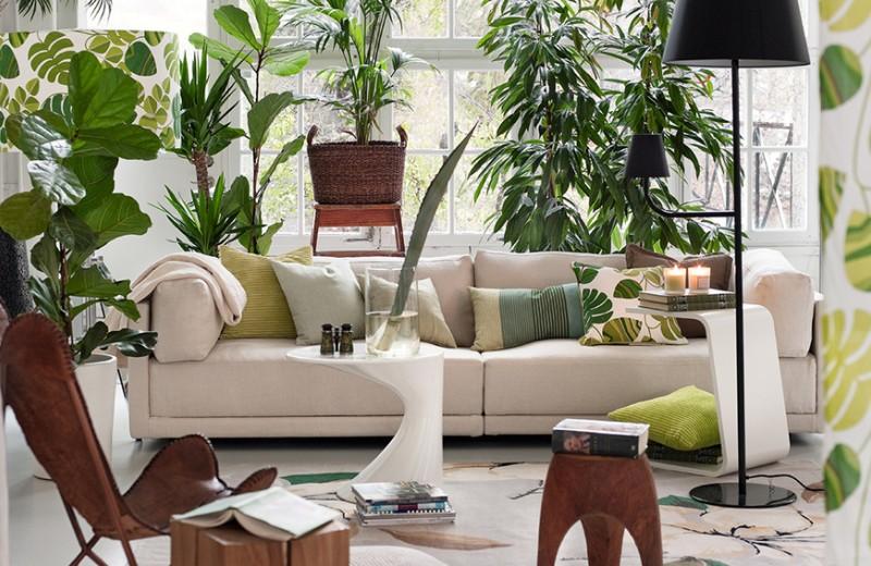 Добавить света, зелени и красоты: как быстро сделать дом уютным