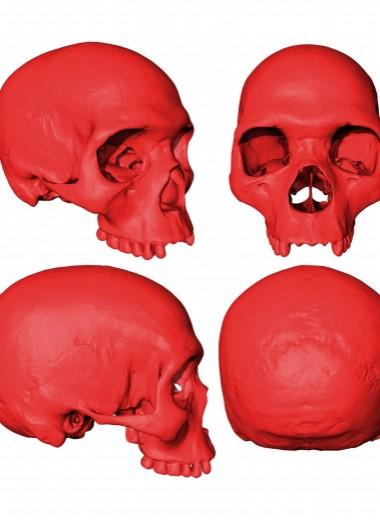 Ученые спроектировали модель черепа общего предка всех людей