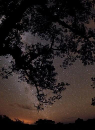 Национальный парк Ясуни: чудеса на продажу