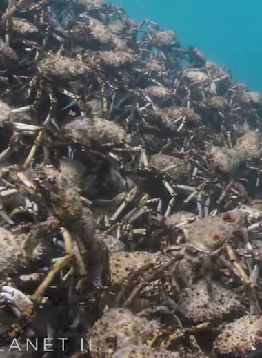 Путешествие армии гигантских крабов: видео