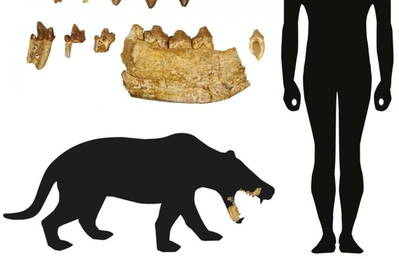 Новый род вымерших зубастых хищников обнаружен в Швейцарии