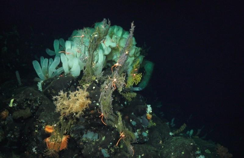Ученые оценили влияние климатических изменений на глубины океана