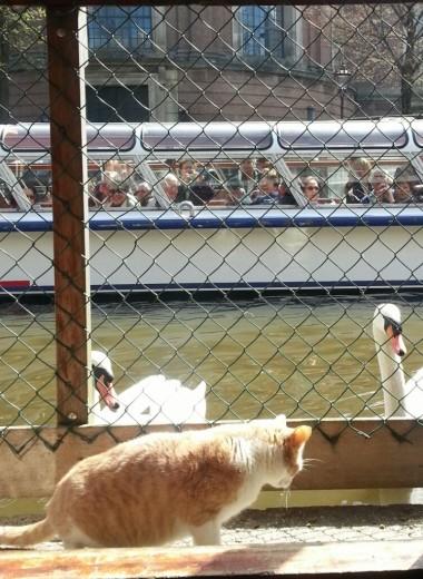Единственный в мире плавучий приют для кошек: опыт Амстердама