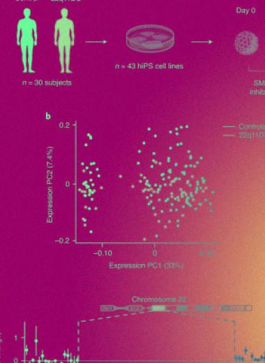 Биологи разобрались в механизме возбуждения нейронов предрасположенных к шизофрении пациентов