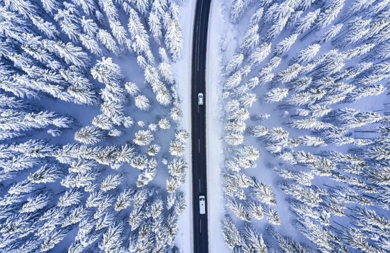 Ёлка живая vs искусственная: что экологичнее, или Невеселые размышления у новогодней ёлки