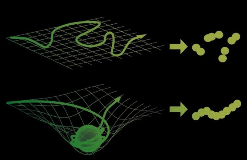 Переходы состояний активности мозга связали с появлением новых мыслей