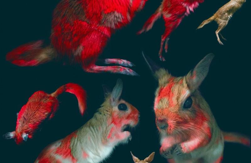Светящиеся грызуны: у африканских долгоногов выявили биофлуоресценцию