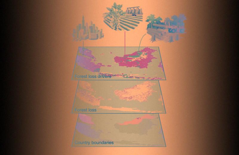 Глобальное обезлесение и сопровождающую его международную торговлю нанесли на карту