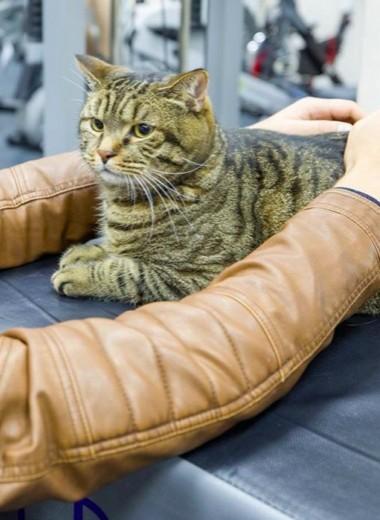 Бизнес с котом Виктором: кто заработает на противостоянии «Аэрофлота» и толстого животного