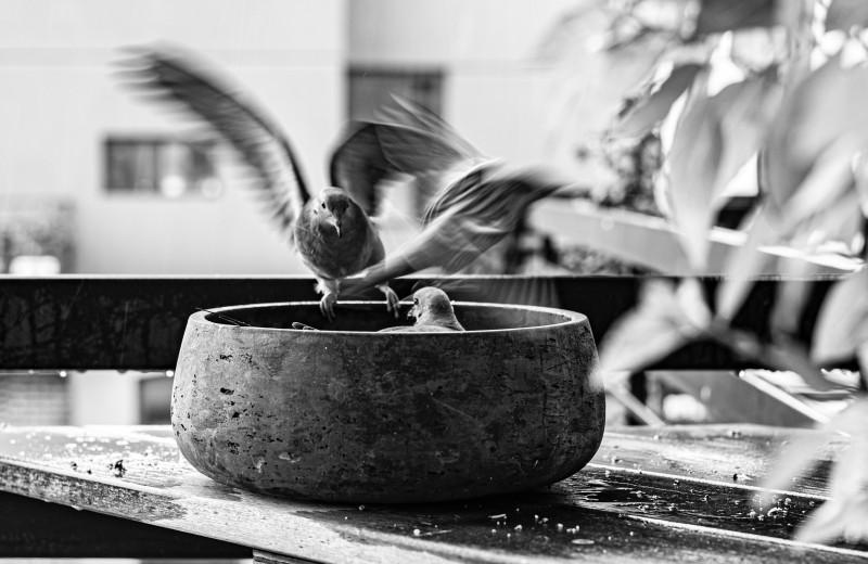 Лучшее антистрессовое занятие осени и зимы — кормить птиц. Вот как делать это правильно