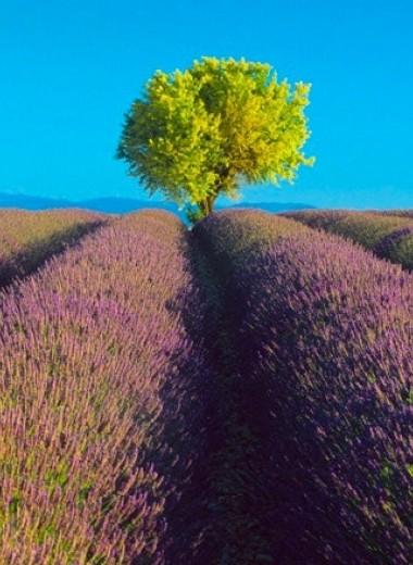 35 простых правил жизни помогут сохранить окружающую среду