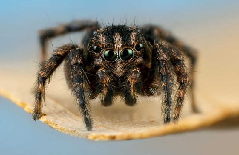 Исследовательница из Новосибирска описала новый род пауков