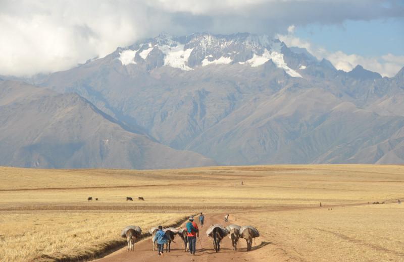 Братья по Перу