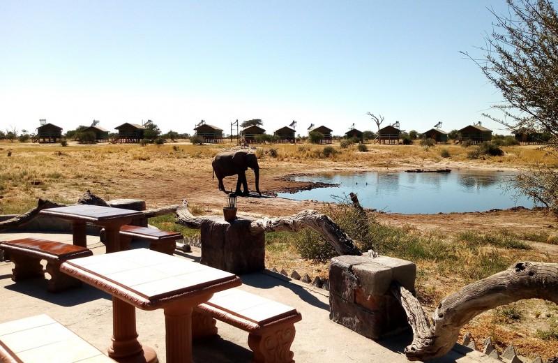 Одна вокруг света. Чем граница Ботсваны напоминает Почту России
