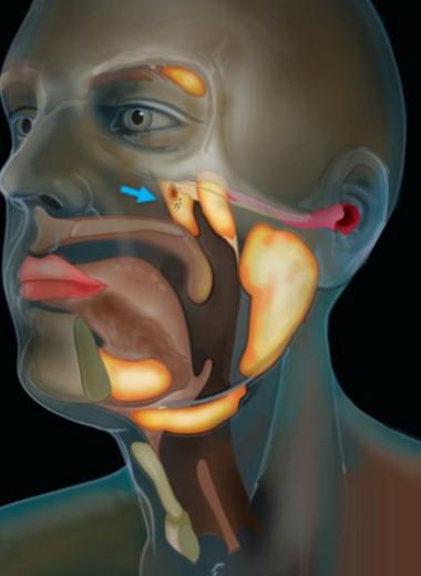 В голове человека обнаружили новый орган