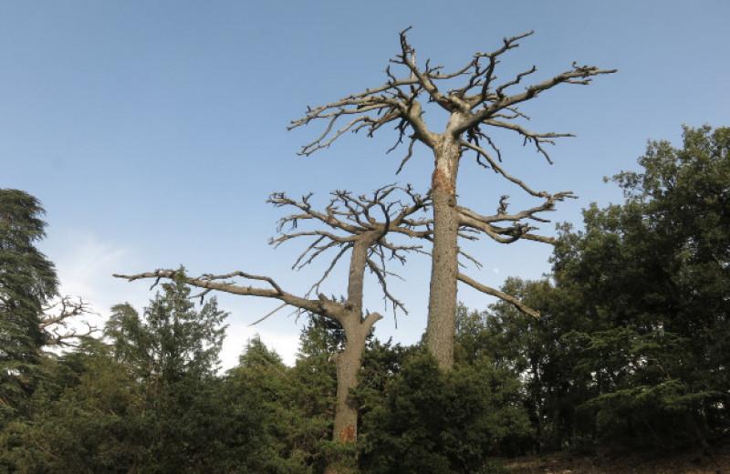 Засухи приведут к массовой замене древесных видов в лесах Земли