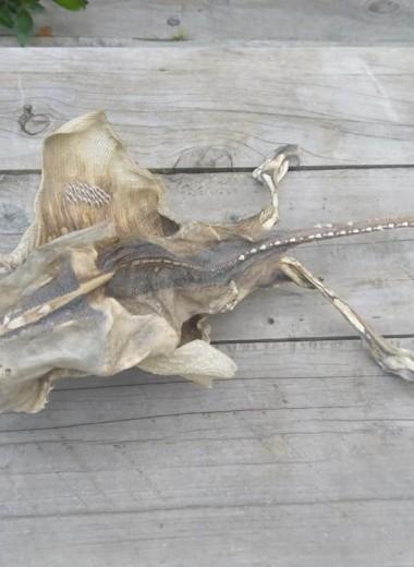 Тайна скелета с новозеландского побережья