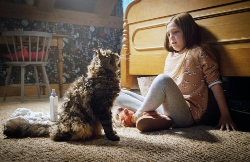 Как «Кладбище домашних животных», но лучше: 2 альтернативы новому триллеру по Стивену Кингу