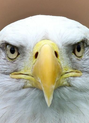 Глаз - алмаз: что, если бы у людей было орлиное зрение