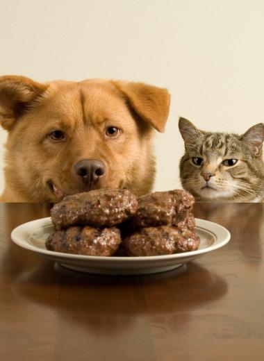 10 обычных продуктов, смертельных для котов и собак