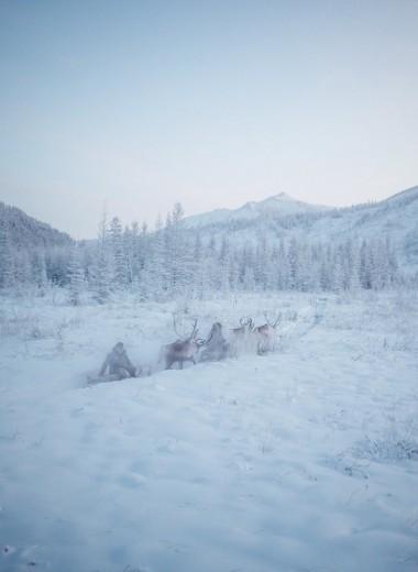 «Покорители холода» – экстремальная экспедиция на север