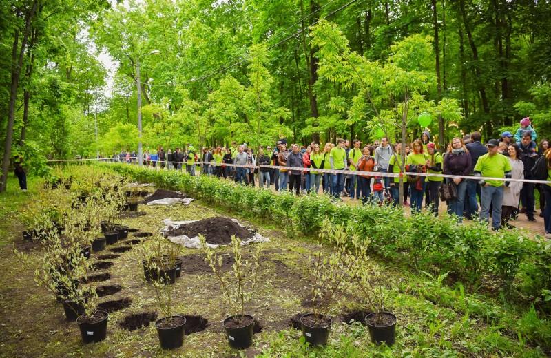 Экологический фестиваль «Красота в действии»