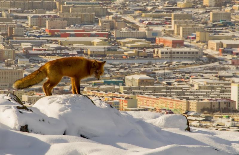 В Москве появились дикие животные