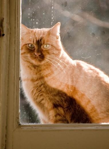 Почему кошки «дружат» с человеком лишь наполовину?