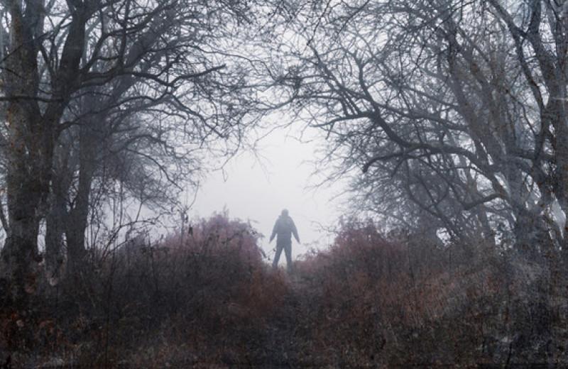 Если вы заблудились в лесу: инструкция по выживанию от психолога