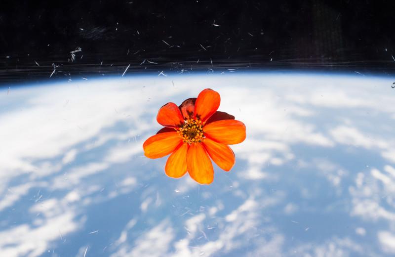 Садовое товарищество: какие культуры выращивают космонавты и кто это все потом ест