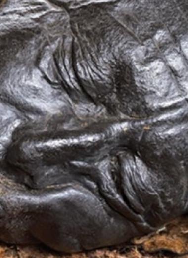 Толлундский человек перед смертью поел каши и немного рыбы