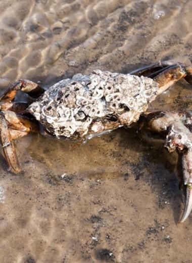 10 пришлых видов, которые приносят пользу экосистеме