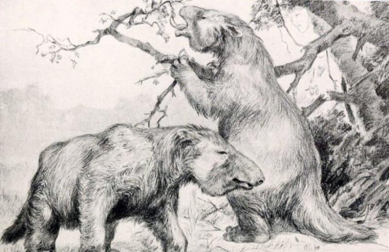 Древние ленивцы были больше многих млекопитающих, включая некоторые виды мамонтов