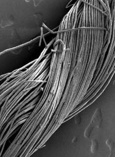 Ультраструктурный анализ указал на высокое качество льняной пряжи в Древнем Египте
