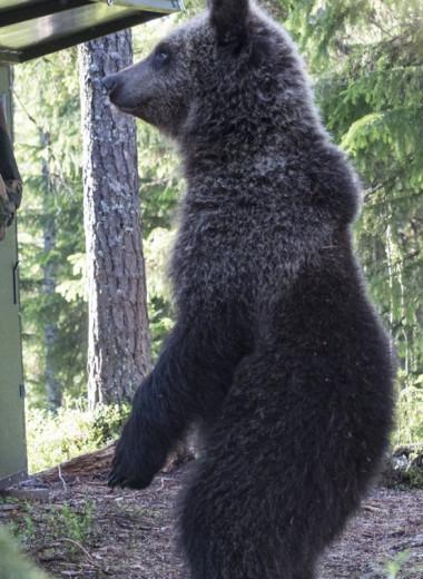 Медвежьи углы планеты в объективе Алексея Шаскольского: фотогалерея