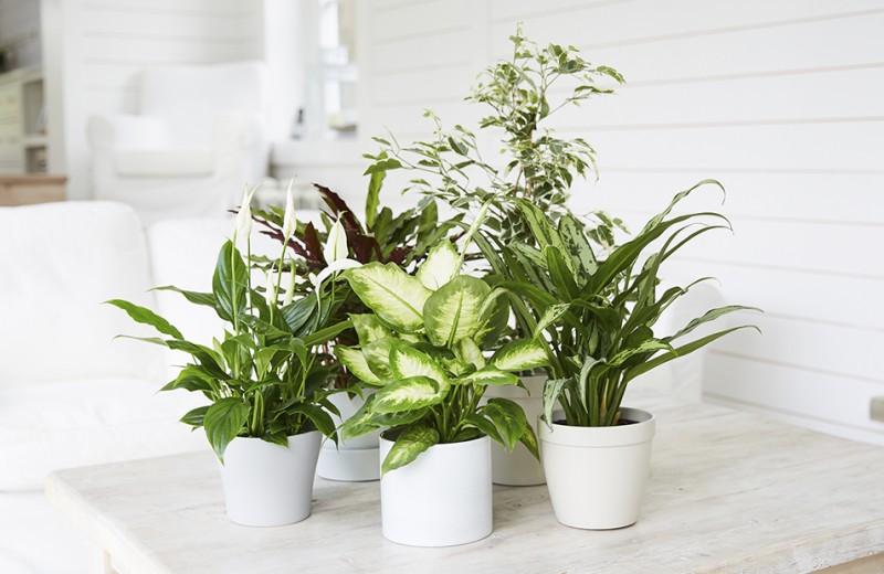 От хлорофиллов к эндорфинам: почему все помешались на растениях