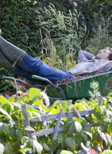 10 растений для ленивых садоводов