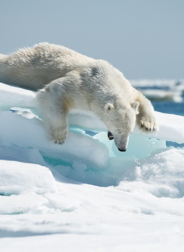 Фотовыставка «Дикая природа России 2018» откроется в ЦДХ 22 декабря!