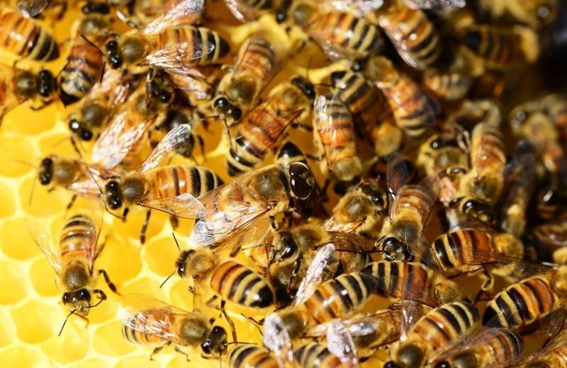 В Бразилии погибло больше 500 миллионов пчел