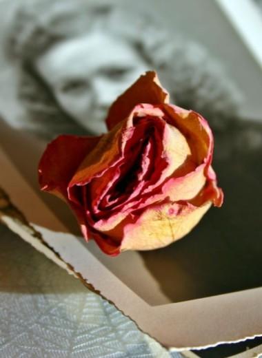 Как отсканировать старые фотографии: 3 простых способа