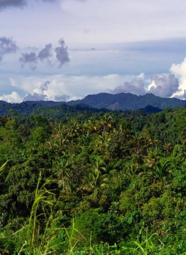 Новая Гвинея обладает самой богатой островной флорой в мире